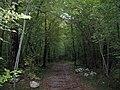 A passeggio nel Bosco...le mie scarpinate - panoramio (1).jpg