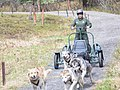 A ranger rides the demonstration cart during a summer sled dog demo (ae33ef03-e991-45d2-8a6c-ed55ba42dd38).jpg