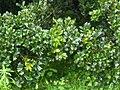 A scene of botanical garden Ooty3.jpg