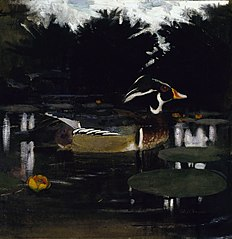 Male Wood Duck in a Forest Pool, study for book Concealing Coloration in the Animal Kingdom