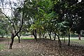 Acharya Jagadish Chandra Bose Indian Botanic Garden - Howrah 2011-02-20 1641.JPG