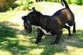 Action dog à sombra.jpg
