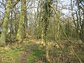 Afternoon sunshine in the woods - geograph.org.uk - 1240503.jpg