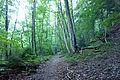 Albertville - trail.jpg