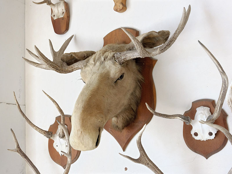 Elk head trophy in the Château de Tanlay, Yonne department, Burgundy, France.
