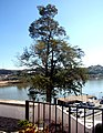 Alcoutim (Portugal) (32402635084).jpg