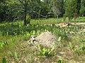 Allegheney mound ant mound.JPG