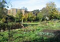 Allotments and flats - geograph.org.uk - 1079364.jpg