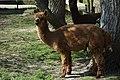 Alpaca2019NL.jpg