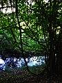 Alto Adige Suedtirol Biotopo Rio dei Gamberi Krebsbach photo by Giovanni Ussi - 21.jpg