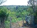 Amlash - panoramio (4).jpg