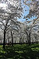 Amstelveen, Netherlands - panoramio (14).jpg