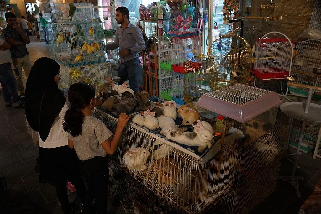 File:An overcrowded animal market at Souq Waqif, Doha jpg