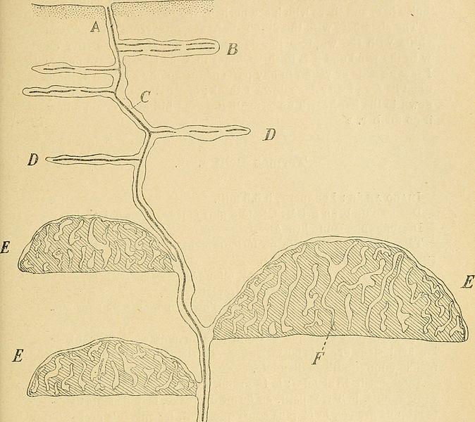 File:Annales de la Société entomologique de Belgique (1905) (14756973986).jpg