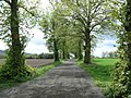 Approach to Balgrove - geograph.org.uk - 426198.jpg