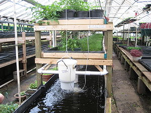 Aquaponics - A commercial aquaponics system. An electric pump moves nutrient-rich water from the fish tank through a solids filter to remove particles the plants above cannot absorb. The water then provides nutrients for the plants and is cleansed before returning to the fish tank below.