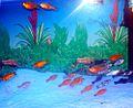 Aquarium fish12.JPG