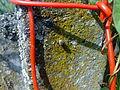 Araignée à Grez-Doiceau 004.jpg