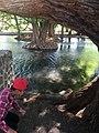 Arboles en rio guadalajara mexicana 2019 (27).jpg