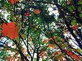 Arboretum Lussich.JPG