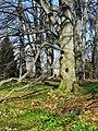 Arboretum Zürich 2012-03-28 15-26-35 (P7000).JPG