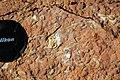 Archaeocyathan limestone (Ajax Limestone, Lower Cambrian; Mt. Scott Range, South Australia) 10.jpg