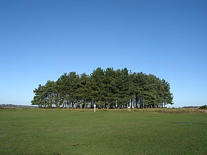 Ashdown Forest - Friends Clump