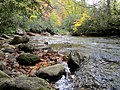 Autum Trees Black Mountain Campground Pisgah Nat Forest NC 4419 (37894585886).jpg