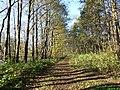 Autumn Forest Road - Kalenieku Street - panoramio.jpg