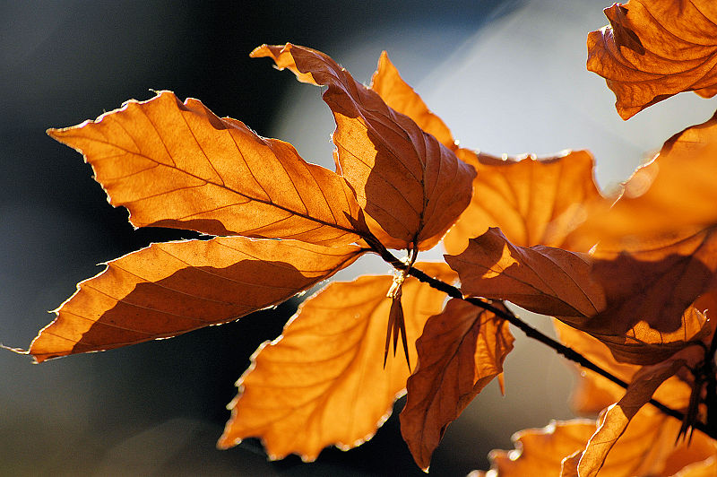File:Autumn leaves sceenario.jpg