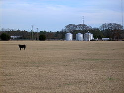 A pasture on the edge of Tar Heel