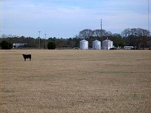 Tar Heel, North Carolina - A pasture on the edge of Tar Heel
