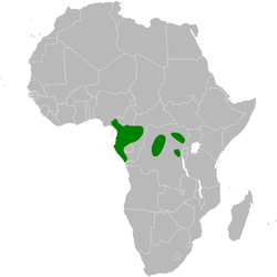 Baeopogon clamans distribution map.png