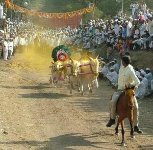 Ambegaon taluka - Bullock cart race at a festival in Manchar