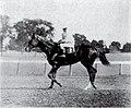 Ballot (horse).jpg
