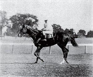 Ballot (horse) - Image: Ballot (horse)