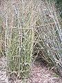 Bamboo 001.jpg