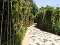 Bamboo Garden in Qinhe Park.jpg