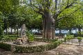 Baobá do Passeio Publico.jpg