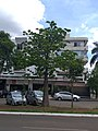 Baobá na quadra 716 norte, em Brasília.jpg