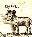 Baran - Lamb.jpg