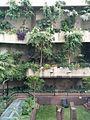 Barbican centre gewaechshaus.jpeg