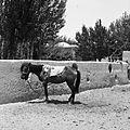 Bazar – miejsce dla koni - Afganistan - 001841n.jpg