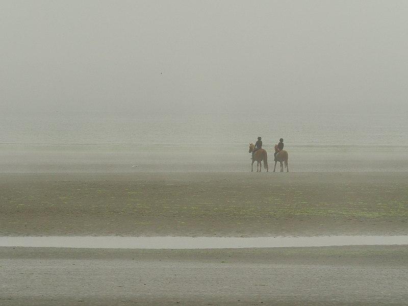 File:Beach Mist And Horses (221538743).jpeg