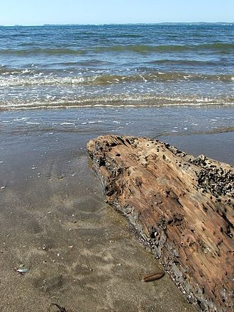 Mairangi Bay - A log on Mairangi Bay beach