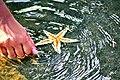 Beautiful Star Fish.jpg