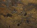 Beaverhole Upper Cave - 04.jpg