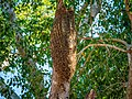 Bee Hive Costa Rica.jpg