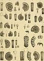 Beiträge zur Paläontologie und Geologie Österreich-Ungarns und des Orients - Mitteilungen des Geologischen und Paläontologischen Institutes der Universität Wien (1894) (20363514585).jpg