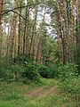 Berkovets forest3.jpg